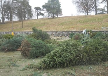 Recycle Christmas trees at three city parks
