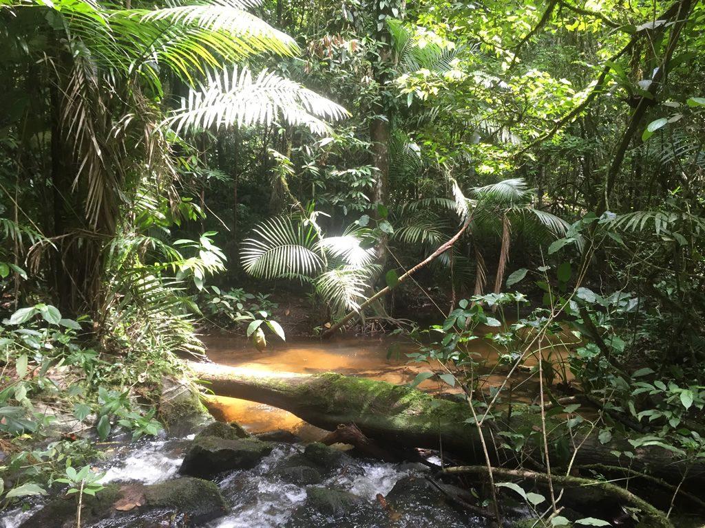 Gran Rio Jungle Expedition  METS NV
