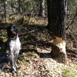 Vielä puoli puuta patoon