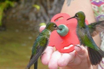 La paz waterfalls gerdens costa rica kolibrier