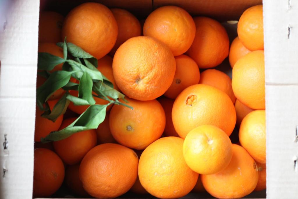 Orangen für Orangenmarmelade