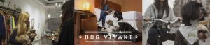 Startup Dog Vivant