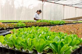 15% da população urbana consome alimentos orgânicos