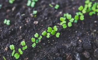Sesc tem curso gratuito de cultivo sustentável