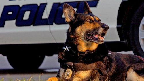 danko-el-perro-policía jubilado