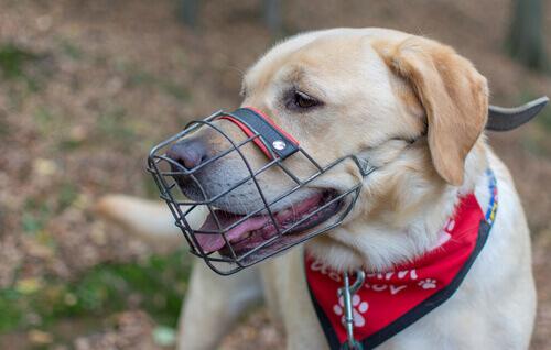 Resultado de imagem para cachorro com focinheira