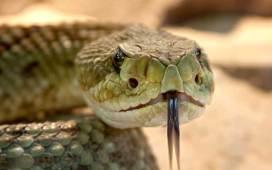 En Irlanda no hay serpientes