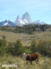 View of the Fitz Roy