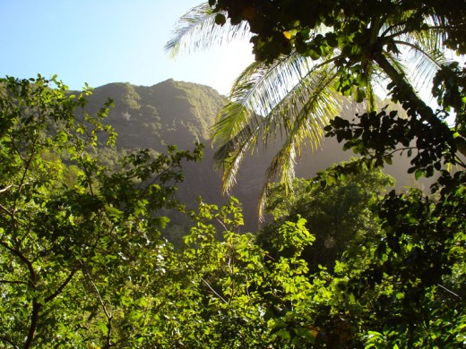 Iao Valley (16)