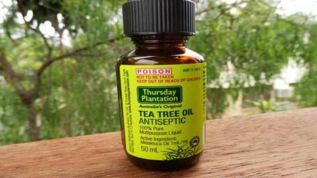 حشرة البق زيت شجرة الشاي