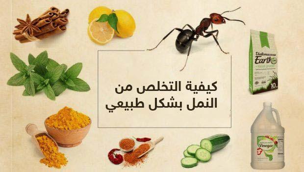 كيفية التخلص من النمل بشكل طبيعي