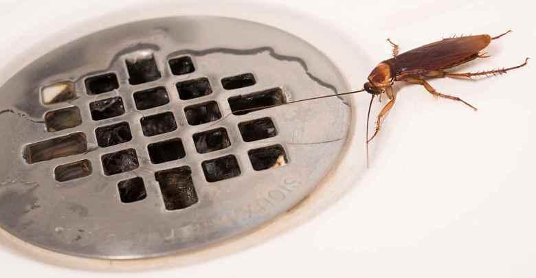 أنواع حشرات المنزل والآفات الأخرى