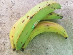 Green plantains for Garlic Tostones