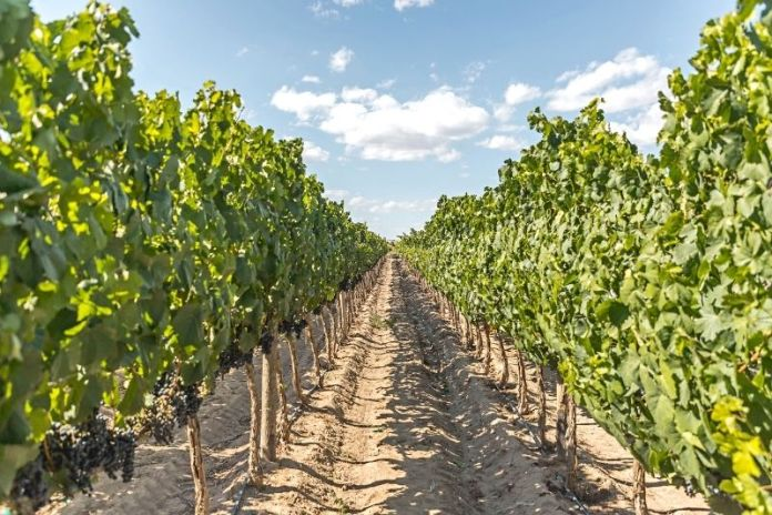 Discover the wine country of San Luis Potosí