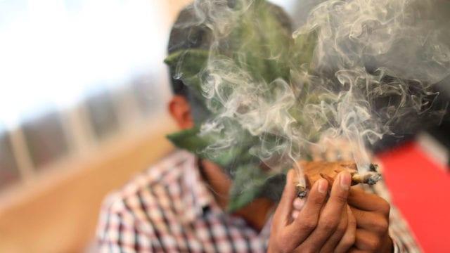 Cannabis5