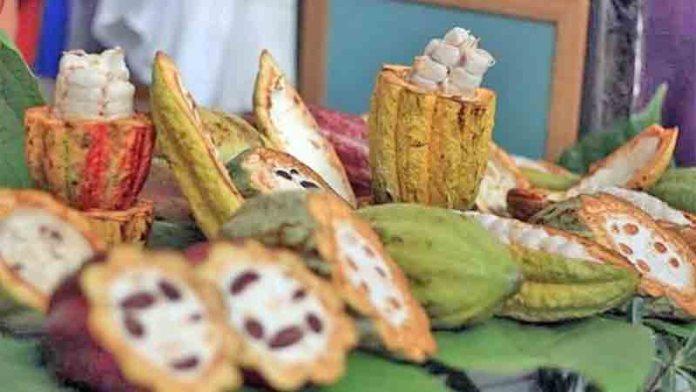 """Le va """"de perlas"""" al plátano y al cacao en Tabasco"""