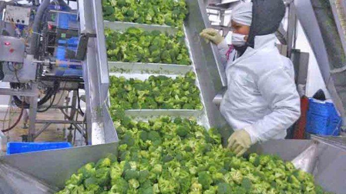 Las exportaciones de Guanajuato continúan: sector agroalimentos presente en las mesas del mundo.