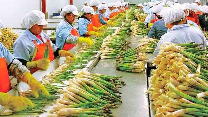 Sonora es líder nacional en exportaciones del agro