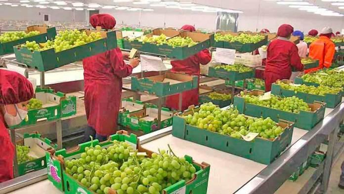 Balanza agroalimentaria aumentó 11.34% entre enero y mayo del 2020: Sader