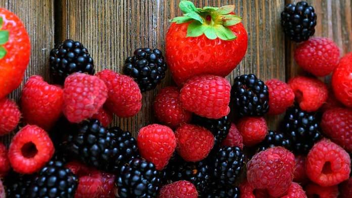 Prevén crecimiento de las exportaciones de berries en tiempos de pandemia