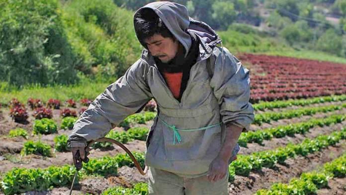 Exportaciones de frutas y hortalizas crecen pese a crisis por el Covid-19