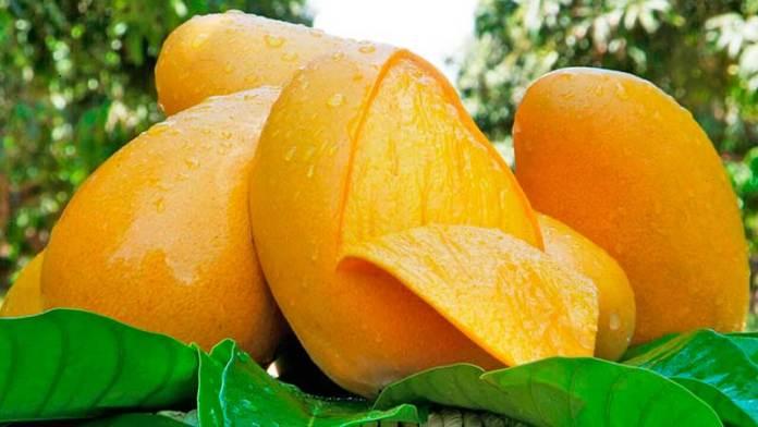 Las exportaciones de mango de México crecen 7.1%