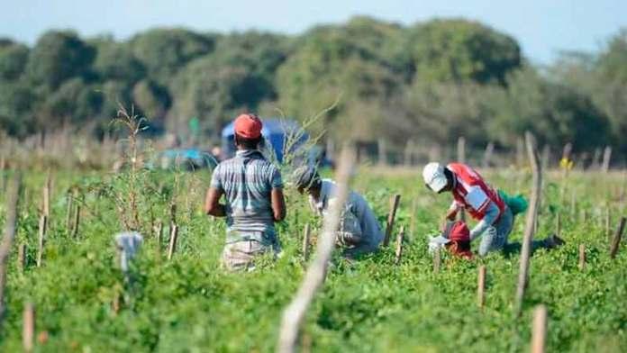 Crece la exportación en Sinaloa