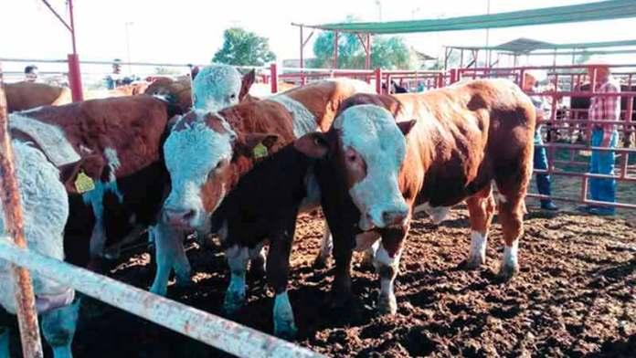 Tiene Sonora un sector agroalimentario sólido en el Gobierno de Pavlovich: Guzmán Nieves