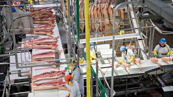 Crecen en 16% las exportaciones porcinas de Estados Unidos