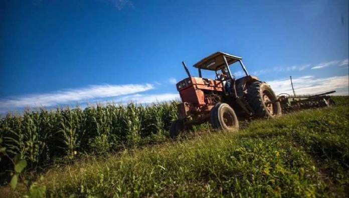 Sader reporta balanza agroalimentaria con superávit mayor de 42.5% en 10 meses de 2020