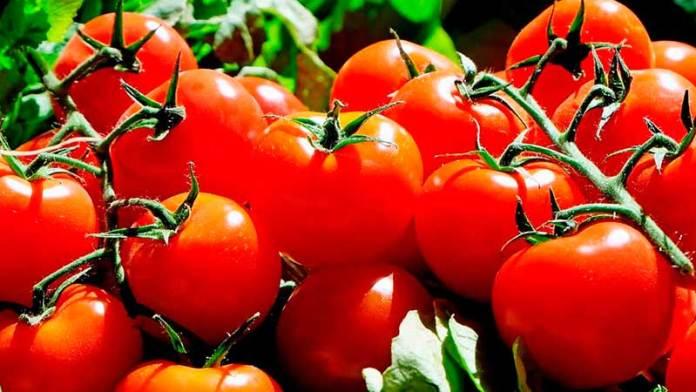 Crecen exportaciones mexicanas de hortalizas
