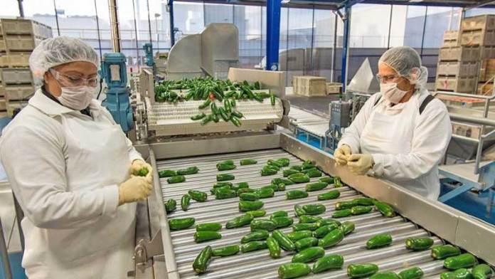 México, lugar de origen del chile… pero China produce cinco veces más