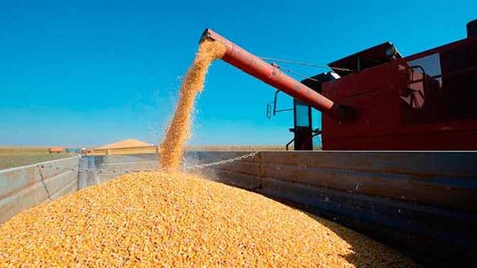 Gobierno de México espera reducción importaciones de maíz en 2021