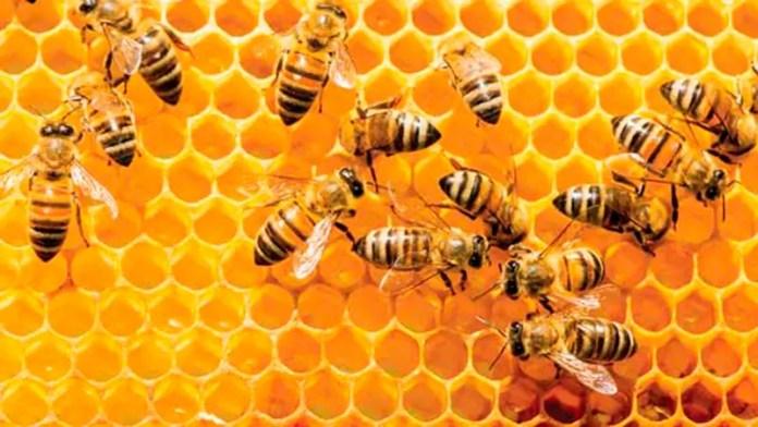 Estados Unidos lidera importaciones de miel en el mundo