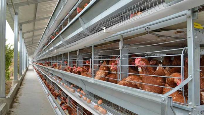 Bachoco incrementa producción de huevos en México