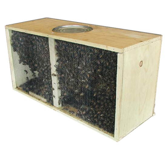 Russian Package Bees - Meyer Bees - photo#5