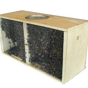 Packages Bees & Bulk Bees