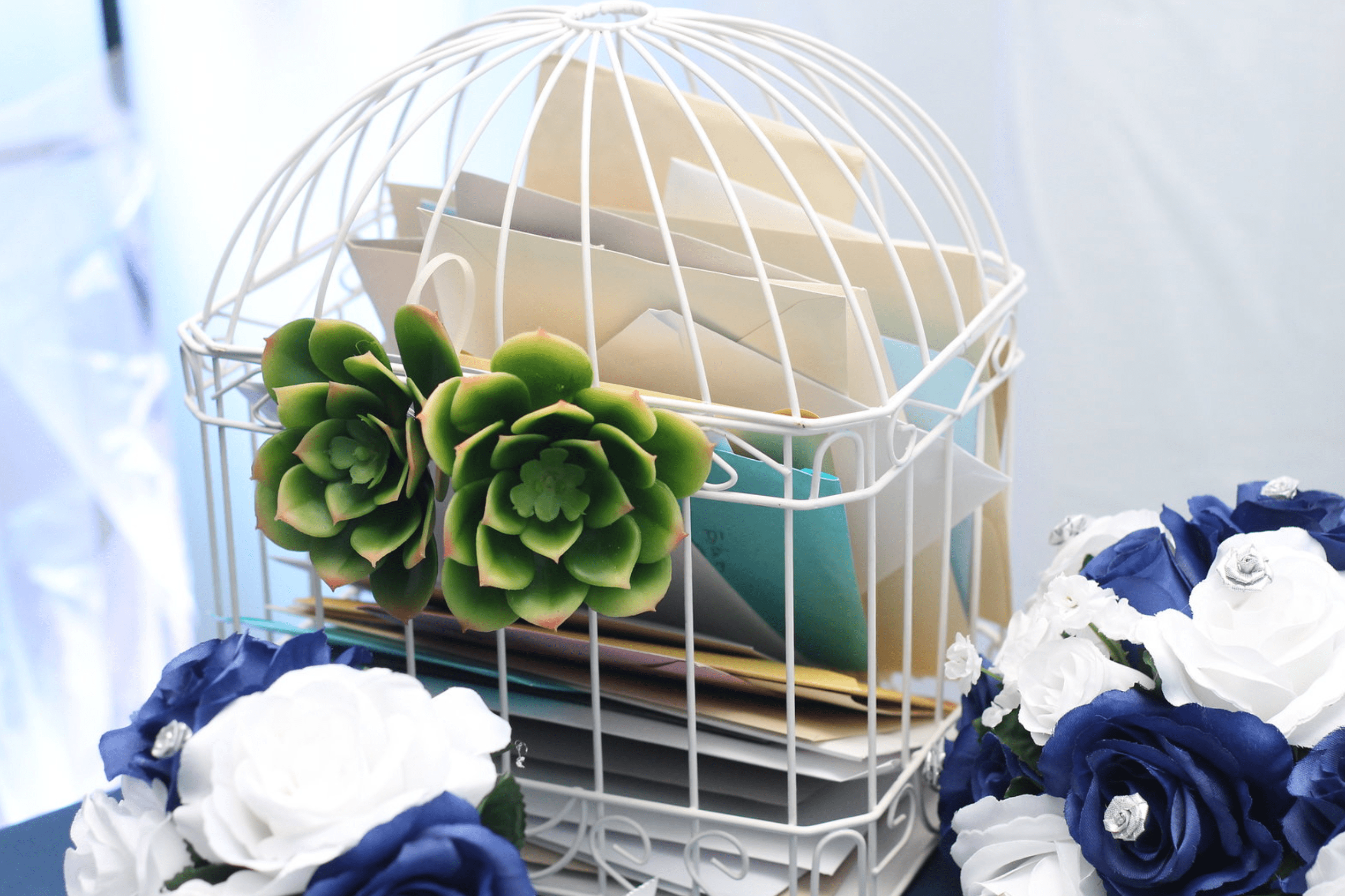 card cage succulents