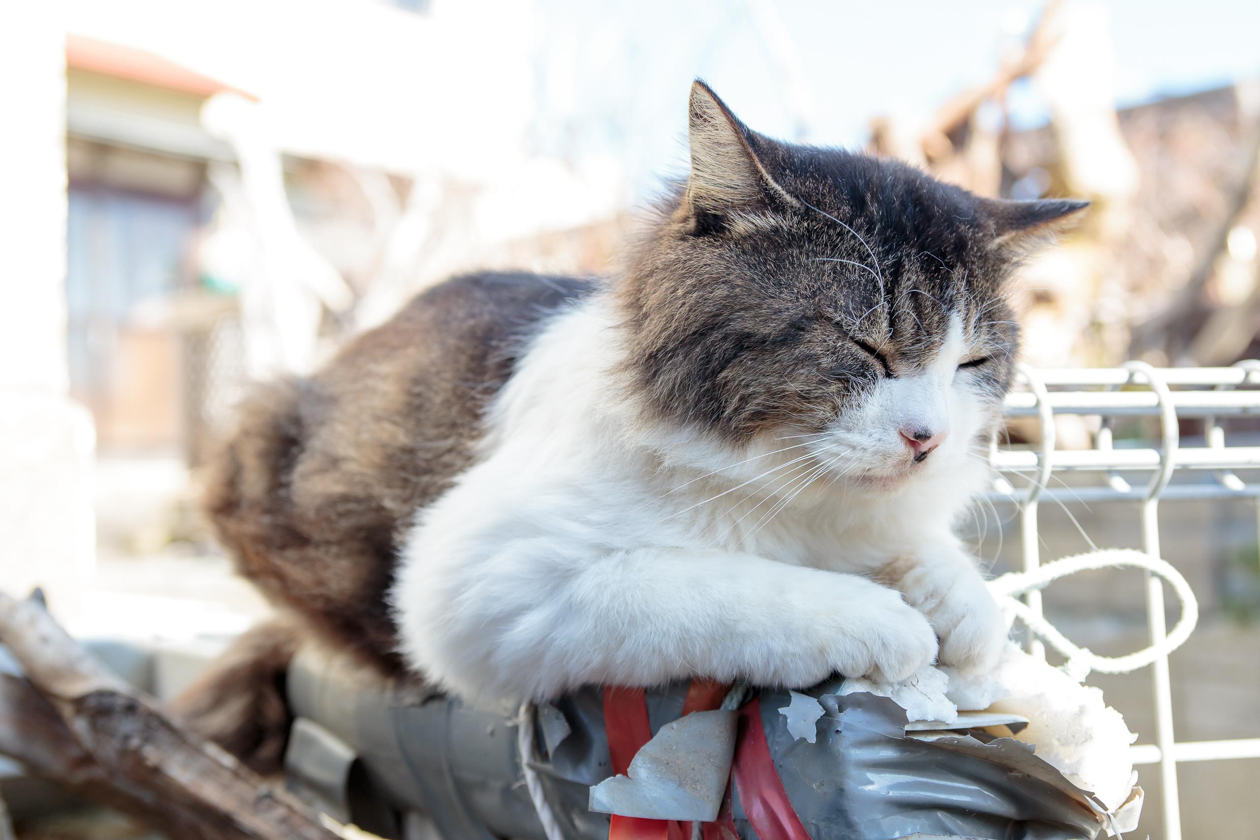 2015年秋 日本貓島(田代島)探訪 – 大閒者Meyer的Lightroom