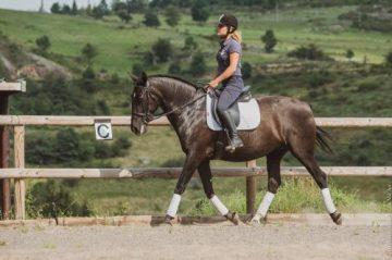 Estrela 2021 black lusitano horse