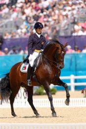 Rubi lusitano olympic stallion