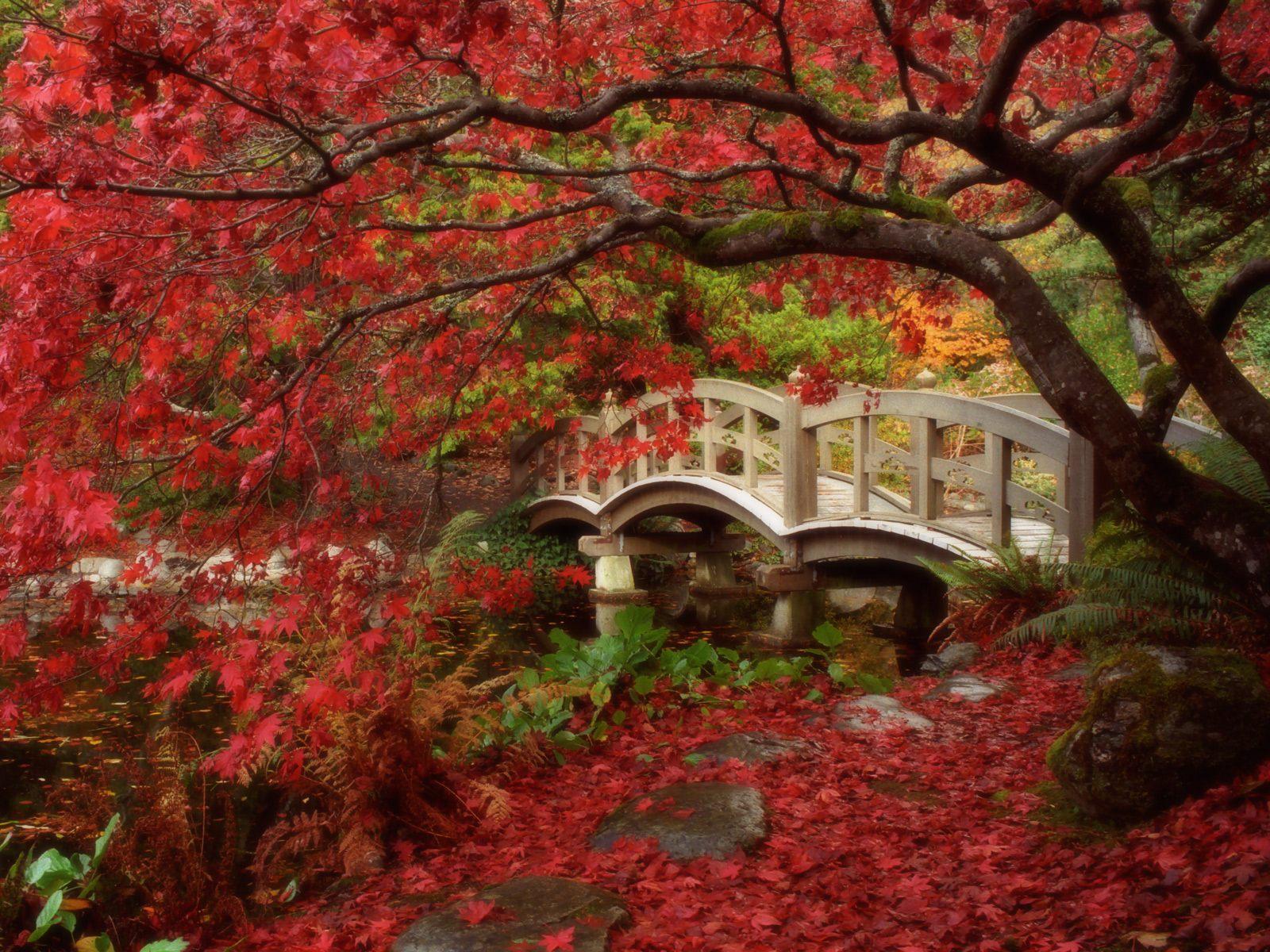 The-Kyoto-Gardens-Japan