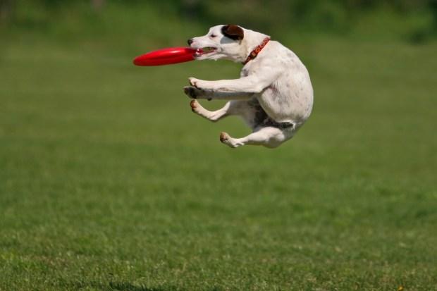 dog-with-frisbee.jpg