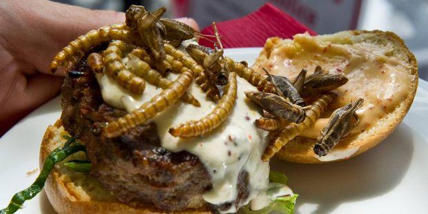 Bugs in meal.jpg