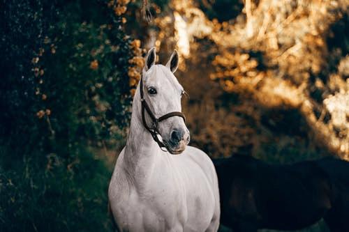Meziesblog horse