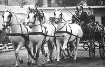"""Bárdos György kedvenc lova a 73-as: """"ki, kit győz le küzdelem volt ez az erős akaratú ló és a konok ember között."""""""