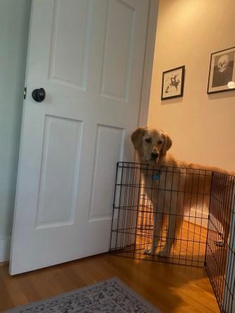 Dog looking forlornly through door