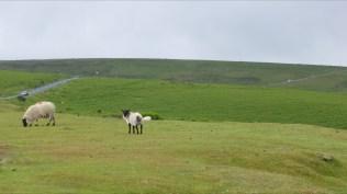National Dart Moor 2