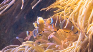 National Marine Aquarium 7