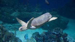 National Marine Aquarium 9